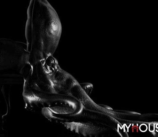 Ghế độc đáo – Ghế bạch tuột có một không hai