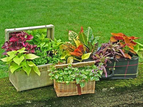 làm mới sân vườn bằng vali