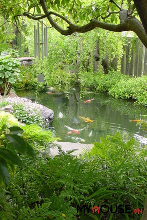 cá cảnh trong hồ nuôi trong sân vườn biệt thự